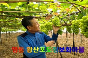 [포커스] 영동군, 황산포도마을 김종기 위원장