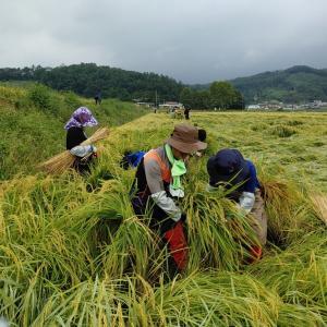 충북신성장산업국, 태풍피해농가 복구 봉사활동 추진