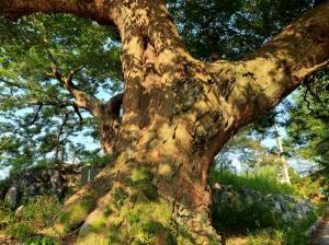[포토] 파란하니 붉고 노란 옥천의 가을 풍경!